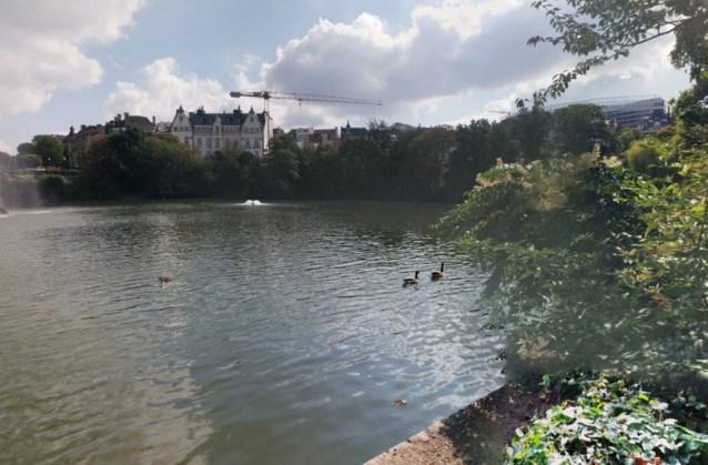 بركة مياه في بروكسل