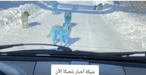 كلاب باللون الأزرق